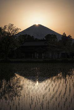富士山、田んぼ、絶景