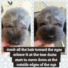 Dog Grooming Styles, Dog Grooming Shop, Dog Grooming Salons, Dog Grooming Supplies, Poodle Grooming, Cockapoo Grooming, Havanese, Labradoodle, Asian Dogs