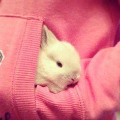 Lion Head Rabbit Baby bunny - Flump - snuggles x