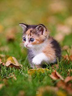 The tiny adventurer.
