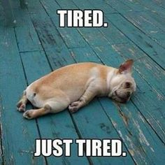 Are you assuming that your body is feeling tiredness or laziness and searching for a tired memes for fun? Here we have funny tired memes that will help you out when you cannot say the words. Funny Dogs, Funny Animals, Cute Animals, Tired Animals, Animal Memes, Dog Memes, Funny Memes, Funny Quotes, Anime Mexico