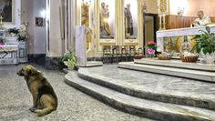 Dog attends Mass daily where owner's funeral was held ... This great story really shows that the love we have for our furry family is returned. It's so great that the Italians in the town are caring for Tommy and that the Father lets him stay for services. What a heartwarming tale!!