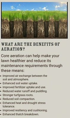 Benefits of lawn aeration. Do It Yourself Lawn Care Tips & Advice Having a green Fall Lawn Care, Lawn Care Tips, Grass Seed Types, Lawn Care Business, Lawn Fertilizer, Pergola Pictures, Lawn Maintenance, Landscape Maintenance, Green Lawn