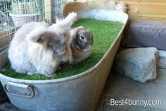 This tin bath filled with soil and grass turf placed on top, is a great way to bring a natural environment into an enclosure.
