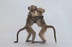 28 clichés d'animaux si drôles qu'ils ont été primés aux Comedy Wildlife Photography Awards | SooCurious