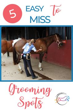 Are you fully grooming your horse? Here are 5 grooming spots easily missed! Pet Peeves, How To Take Photos, Stuff To Do, Equestrian, Pony, Horses, Lifestyle, Animals, Pony Horse