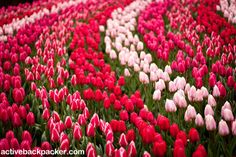 Keukenhof Gardens: The Netherlands Park of Flowers And Tulips - Active Backpacker