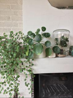 Plants-and-words-Nat-et-nature-Urban-jungle-bloggers #urbanjunglebloggers