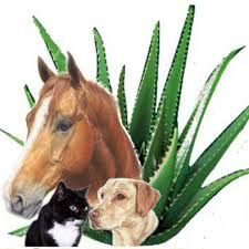 Forever Aloe Vera is for animals too! Juices, creams, face & body wash....keep your pets healthy with Aloe Vera.