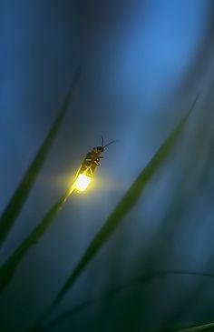 Ein kleines Licht in der Dunkelheit. Sieht man selbst von ganz weit weg.