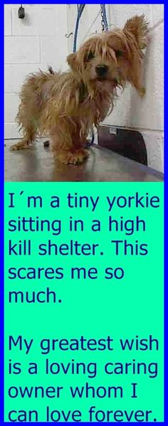 FIONA (A1707278) I am a female brown and black Yorkshire Terrier mix. The shelter staff think I am about 3 years old. I was found as a stray and I may be available for adoption on 06/30/2015. Miami Dade https://www.facebook.com/urgentdogsofmiami/photos/pb.191859757515102.-2207520000.1435157208./1000784216622648/?type=3&theater