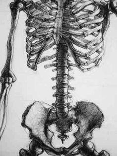 Wonderful Learn To Draw People The Female Body Ideas. Mesmerizing Learn To Draw People The Female Body Ideas. Anatomy Sketches, Anatomy Drawing, Anatomy Art, Drawing Sketches, Art Drawings, Drawing Stuff, Human Anatomy, Pencil Drawings, Skeleton Drawings