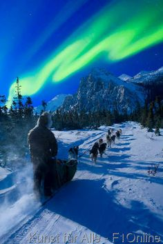 Musher and dog team traveling beneath the Aurora in the White Mountains Recreation Area during Winter in Alaska.