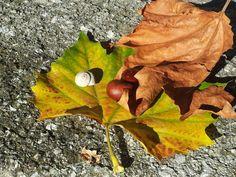 Trotz den fast schon sommerlichen Temperaturen herbstelt es schon in der Stadt Salzburg. Die Schnecken haben ihre Häuser verlassen, Kastanien fallen von den Bäumen und die dazugehörigen Blätter schimmern in einem herrlichen orangen Rot. Der Herbst kann also kommen - wenn er nicht schon längst da ist. #OM