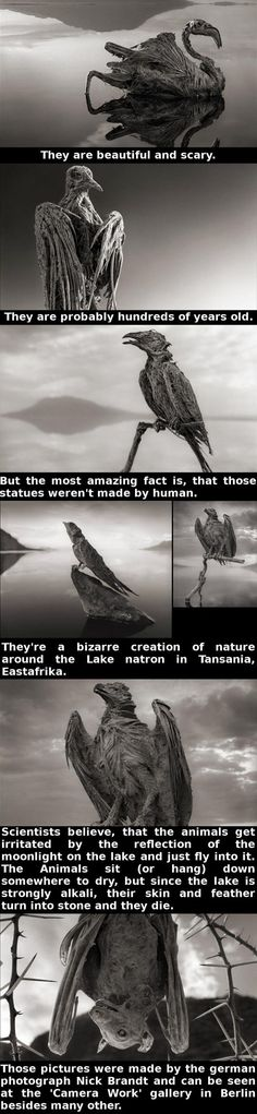 This explanation is a bit untrue, but the truth is still fascinating. http://news.nationalgeographic.com/news/2013/10/pictures/131003-calcified-birds-bats-africa-lake-natron-tanzania-animals-science/ another article http://m.livescience.com/40135-photographer-rick-brandt-lake-natron.html