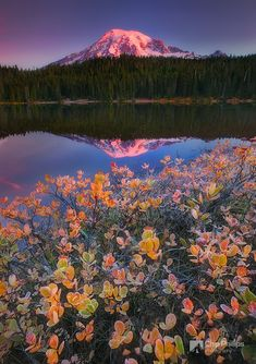 ~~Fall Morning Reflection Lakes ~ Mount Rainier National Park, Washington by Chip Phillips~~ Beautiful World, Beautiful Places, Beautiful Pictures, All Nature, Amazing Nature, Perfect Day, Mount Rainier National Park, Quelques Photos, Belleza Natural