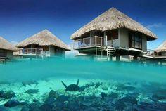 Bora Bora// where pat and I will honeymoon