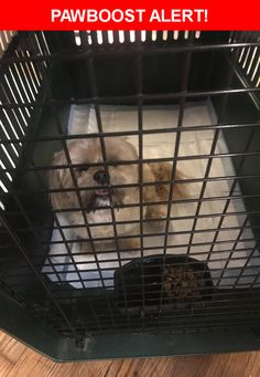 Is this your lost pet? Found in Tacoma, WA 98406. Please spread the word so we can find the owner!  Golden color older. Sweet well trained and mannered. Also well fed and groomed  Near N Huson St & N 9th St