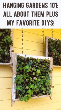 Hanging gardens are