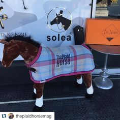 Make sure you go hangout with Stanley at @soleaequestrian and checkout the…