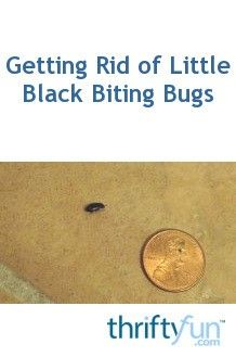Many types of bugs are small and black, if they are biting bugs they can be annoying and a health hazard. This is a guide about getting rid of tiny biting black bugs.
