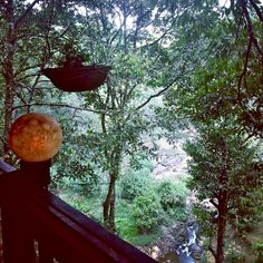 """Travel writer, Natasha Pradhan's view of Kerala, India from the tree tops -  """"I sit out on the edge of the forest, listening to its nocturnal orchestra and extending each limb out into the treetops to absorb gentle trickles of rain..."""" Read more on our blog, http://www.georama.com/blog/kerala-india-from-a-tree-house/"""