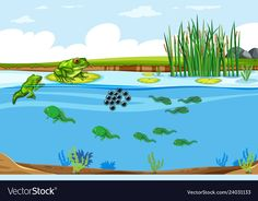 Green frog life cycle scene vector image on VectorStock Lifecycle Of A Frog, Frog Life, Green Frog, Single Image, Lawn Fawn, Life Cycles, Trees To Plant, Adobe Illustrator, Art Reference