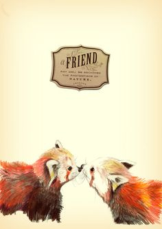 Red Panda Friends Art Print