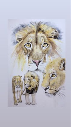 A commission for a client. Lion Illustration, Artwork, Animals, Work Of Art, Animales, Auguste Rodin Artwork, Animaux, Artworks, Animal