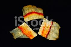 Natural Object - Stock Image royalty-free stock photo
