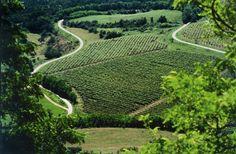 Wineyards of Istria Travel List, Business Travel, Luxury Travel, Vineyard, Istria Croatia, Flora, To Go, Walking, Europe