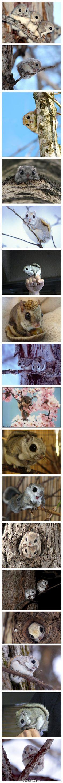 Japanese Momonga soooooooooooooooooooooooooooooooooooooooooooooooooooooooooooooooooooooooooooooooooooooooooooooooo cute!!!!!