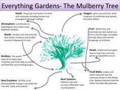 Attitudinal Principles- Everything gardens, a proliferation of life from within | A Permaculture Design Course Handbook