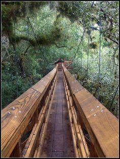 Myakka Canopy Walkway