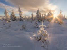 Winter Light. by bonnieandclyde. Please Like http://fb.me/go4photos and Follow @go4fotos Thank You. :-)