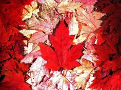 A (Canadian) Thanksgiving Reflection Canadian Culture, I Am Canadian, Canadian Girls, Canadian History, Canada Leaf, O Canada, Canadian Maple Leaf, Canadian Thanksgiving, Fb Cover Photos