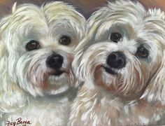 """Daisy and Lily"" / Maltese / 11""x14"" acrylic/oil on wood panel / visit faybeccadesigns.com to see more pet portraits buy FayBecca."