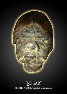 "Real Shrunken Head Photo.  ""Edgar"" www.RealShrunkenHeads.com Tsantsa: Oddities & Curiosities"