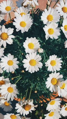 ideas wall paper flowers daisy for 2019 Tumblr Wallpaper, Wallpaper Tumblrs, Daisy Wallpaper, Tumblr Backgrounds, Cute Backgrounds, Phone Backgrounds, Wallpaper Backgrounds, Phone Wallpapers Tumblr, Flower Iphone Wallpaper