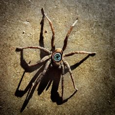 How to make a creepy spider even creepier: stick an eye on it