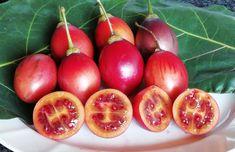In my Garden – The Tamarillo/Tree Tea Tomato wanaabeehere Beta Carotene, Yummy Smoothies, Eating Raw, In The Flesh, Tea Tree, Chutney, Superfood, Turmeric, Benefit