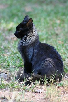 Post with 4256 votes and 177410 views. Tagged with cats, warriors, warrior cats; Pretty Cats, Beautiful Cats, Animals Beautiful, Cute Baby Animals, Animals And Pets, Funny Animals, Funny Horses, Cute Cats And Kittens, Cool Cats