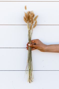 BUNNY TAILS Herbal 60 stems Pampas Grass - LUXE B OFFICIAL