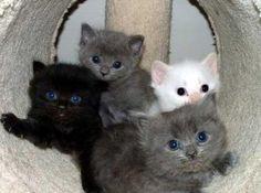 cute kittens | Flickr - Photo Sharing!