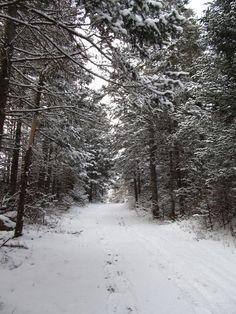 Lower Falls Trail, Ammonoosuc River, New Hampshire, United States