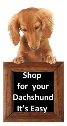 Learn more about the coat varieties of the dapple dachshund