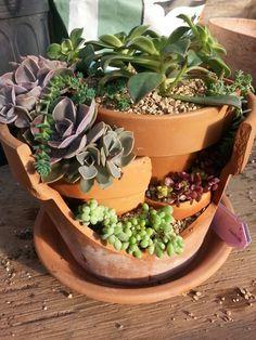 Broken terracotta succulent planter