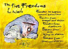 5 freedoms for animals classroom poster. Black Bedroom Furniture Sets. Home Design Ideas
