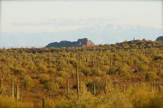 San Tan Park with Mt. Lemmon in background with snow capped peaks.