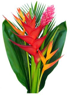 Tropical flowers.
